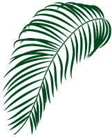 palm tree piece for decoration